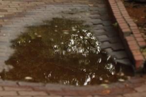 水たまり (1)