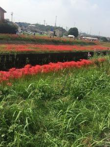 川岸の彼岸花と彼岸花を思い思いに楽しむ人たち